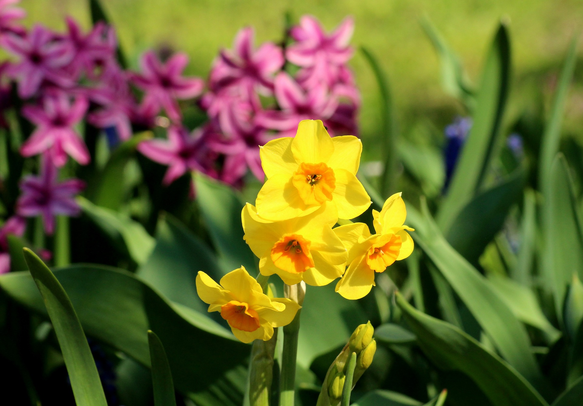 Frischekur für den Garten zum Frühling